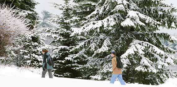 Students walk along a path bordered by snow covered trees.