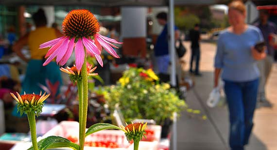 UMD's weekly Summer Market Day features local artists, flowers, and produce.