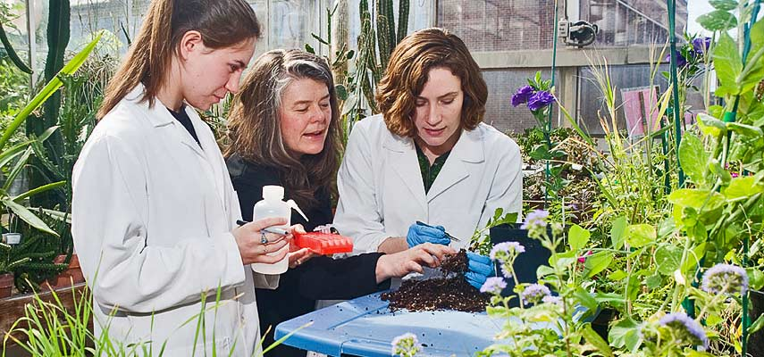 Julie Etterson (center), associate professor of biology, and her team are researching climate change and the genetics of plant migration and adaptation. UMD student Rachel Toczydlowski (l) and lab technician and 2010 UMD alumna Jessica Chatterton (r) examine plant roots in the UMD greenhouse.