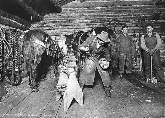 Blacksmith shoeing horse at a lumber camp.