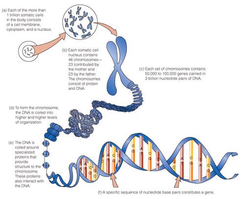 camberwell biology 10th edu pdf
